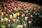 Chicago Botanical Garden-33