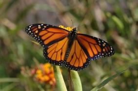 http://socalbutterflies.com/